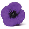 Material Purple Poppy Badge
